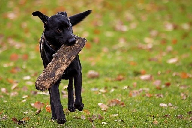 Hunde am Elzdamm sorgen für Ärger