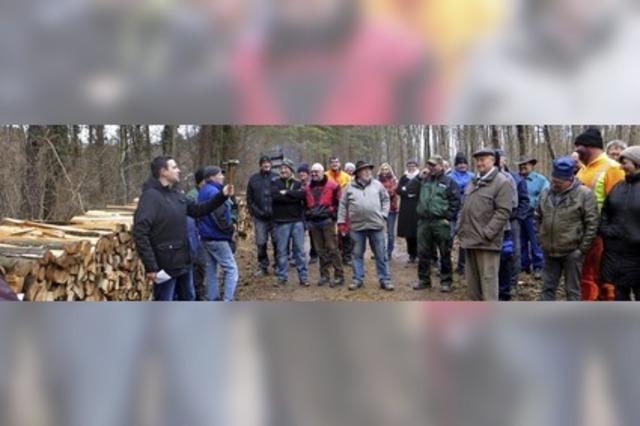 Hartheimer Holz unter dem Hammer