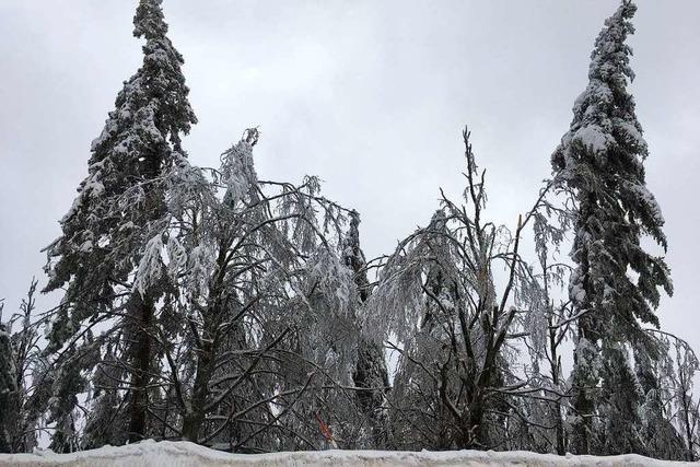 Landratsamt warnt nach Schnee und Regen vor Wald-Spaziergängen