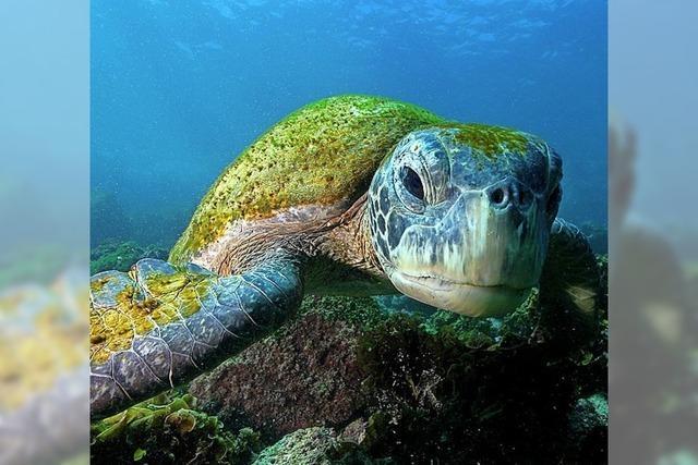 David Hettich: Abenteuer Ozeane in Denzlingen