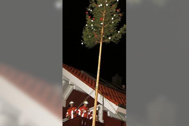 Baum für Bix