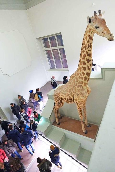 Impressionen vergangner Museumsnächte  | Foto: Miroslav Dakov