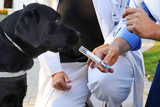 Warum können Hunde so gut riechen?