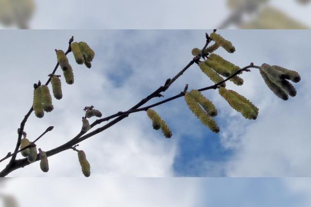 Ja ist denn schon Frühling?