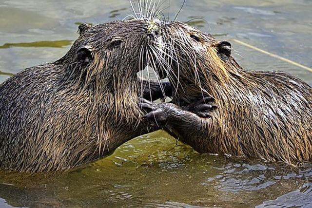 URTEILSPLATZ: Badegäste tragen Pelz