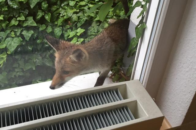 Kurz gemeldet: Wildtiere in der Stadt melden