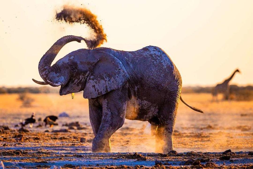 Steht für Glück: Afrikanischer Elefant  | Foto: Josef Niedermeier