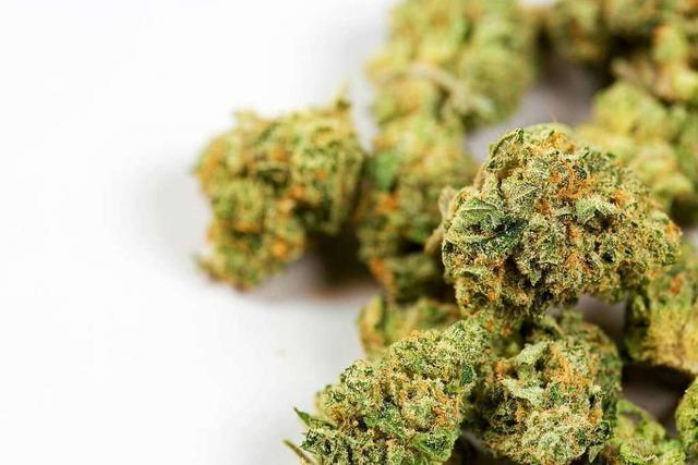 Haftbefehl: Polizei lässt mutmaßlichen Dealer mit 2,5 Kilo Marihuana hochgehen
