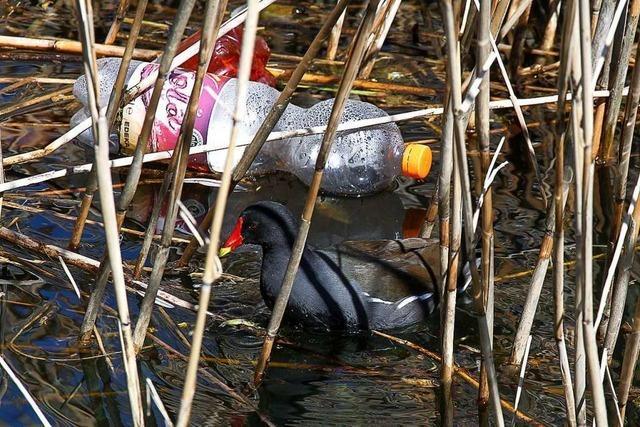 Plastikmüll im Flückigersee
