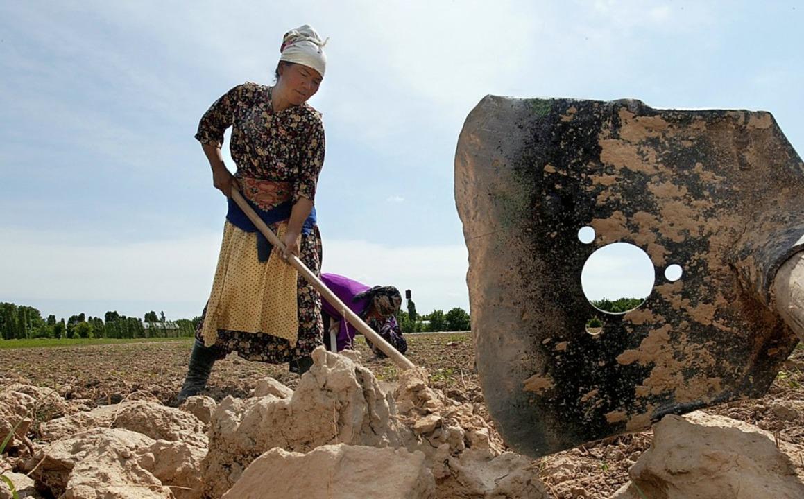 Baumwollernte in Usbekistan  | Foto: afp