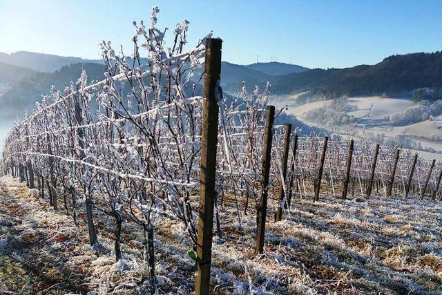 Glottertals Jungwinzer laden zum winterlichen Weinfest in den Reben