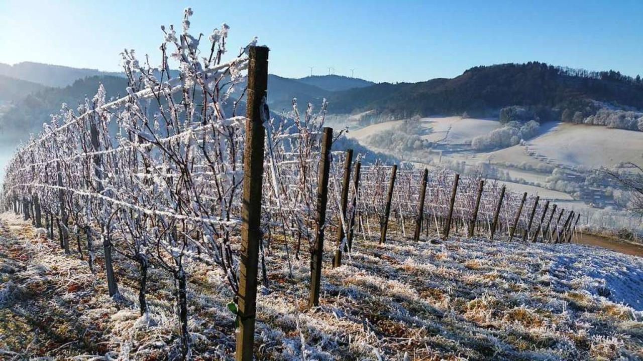 Wenn dann noch Schnee auf dem Glottert...rfüllt sich ein Wunsch der Jungwinzer.  | Foto: Otto Binder
