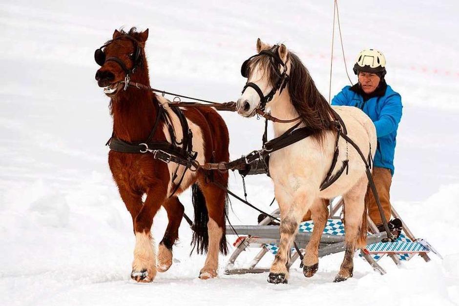 Beim Pferdeschlittenrennen des Reit- und Fahrvereins St. Märgen wurde um die Wette gefahren – dabei wurden nicht nur Schlitten gezogen. (Foto: Wolfgang Scheu)