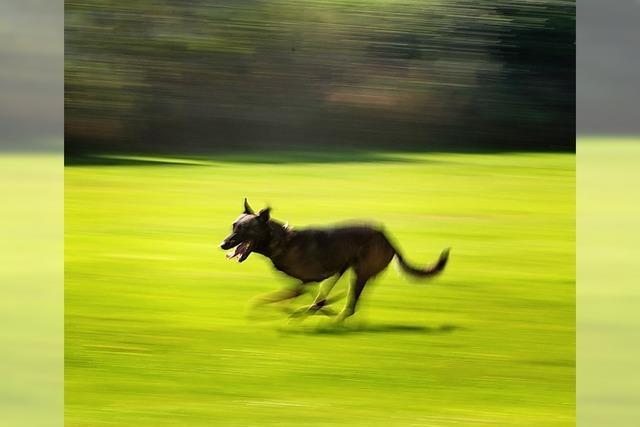 Schäferhundeverein schließt turbulentes Jahr ab