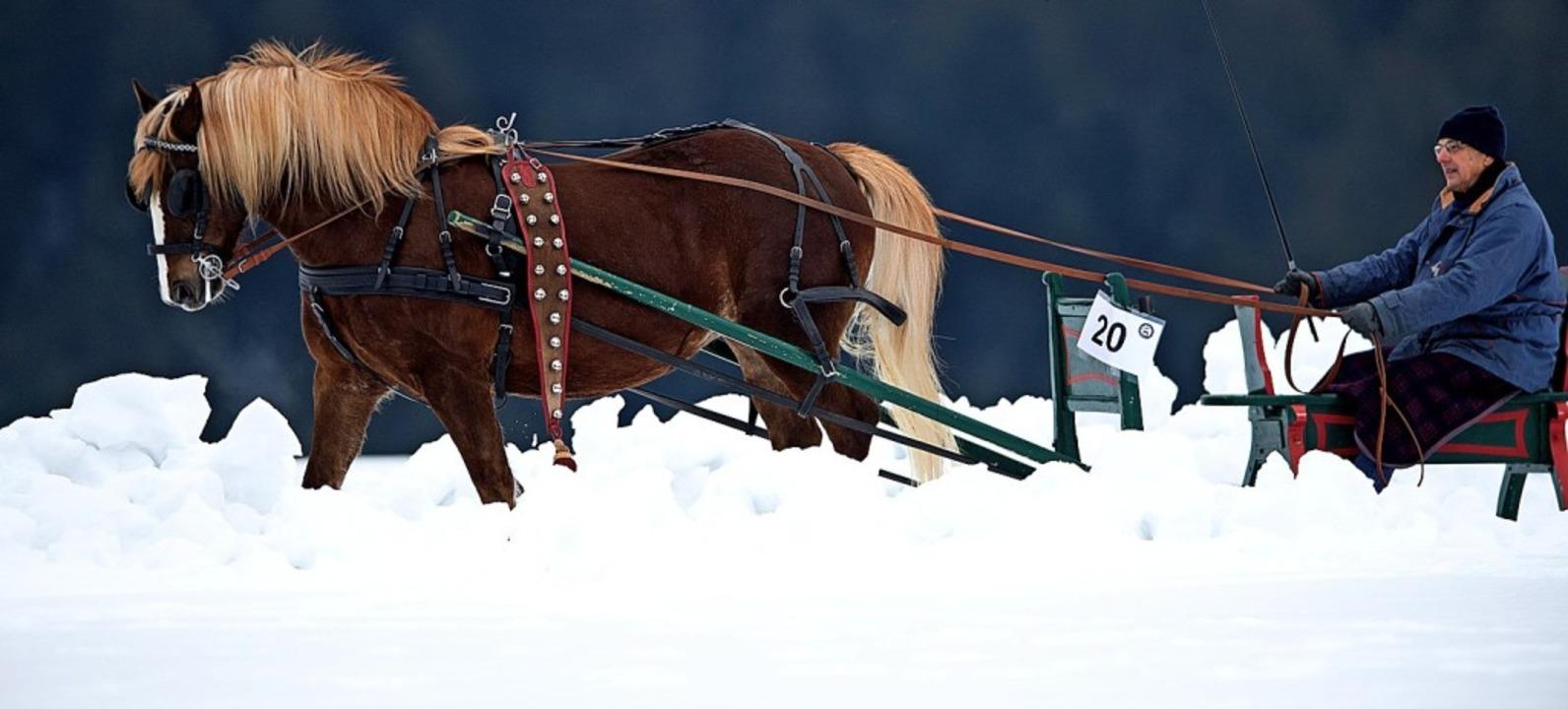 Josef Waldvogel, der Altbürgermeister ...ten Pferdeschlittenrennen als Aktiver.    Foto: Wolfgang Scheu