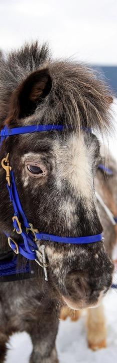 Schau&#8217; mir in die Augen, Pony <ppp></ppp>  | Foto: Wolfgang Scheu