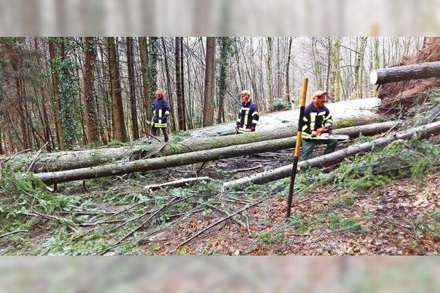 Umgestürzte Bäume machen Arbeit