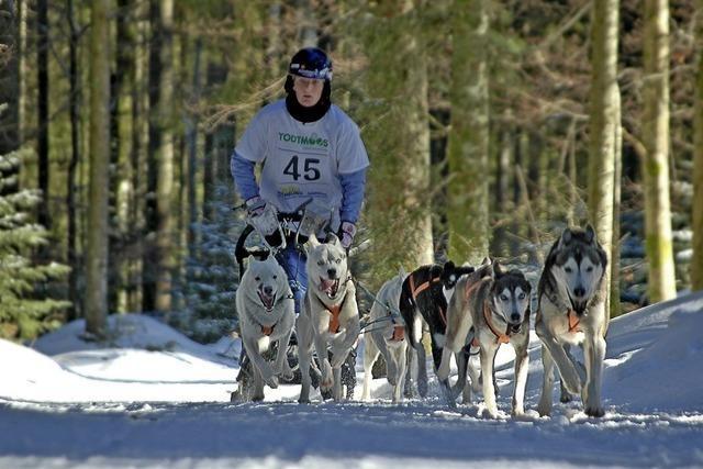 Internationales Schlittenhunderennen mit Deutscher Meisterschaft und buntem Begleitprogramm am Wochenende