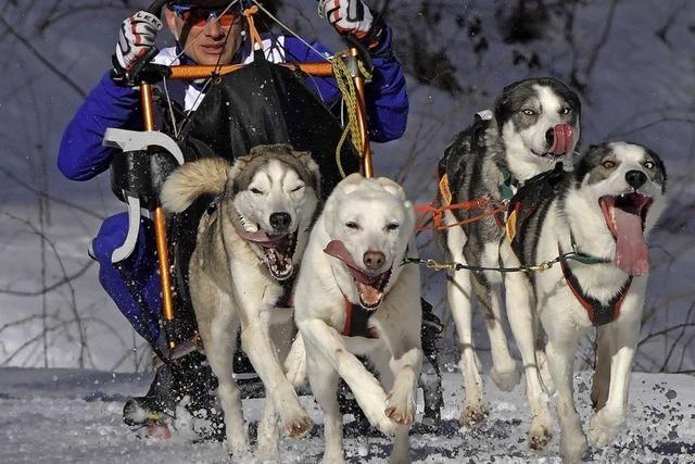 Mehr als 1000 Hunde sind am Start
