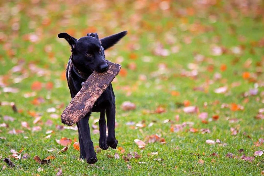 Für  Hunde in Görwihl gilt die für das... sieht das Landratsamt keinen Verstoß.  | Foto: Christian Charisius (DPA)