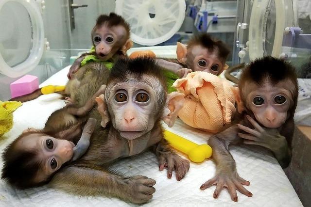 Genmanipulierte und geklonte Affen