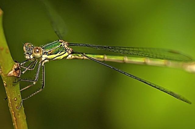 Seltene Libelle führt zu Fördermitteln