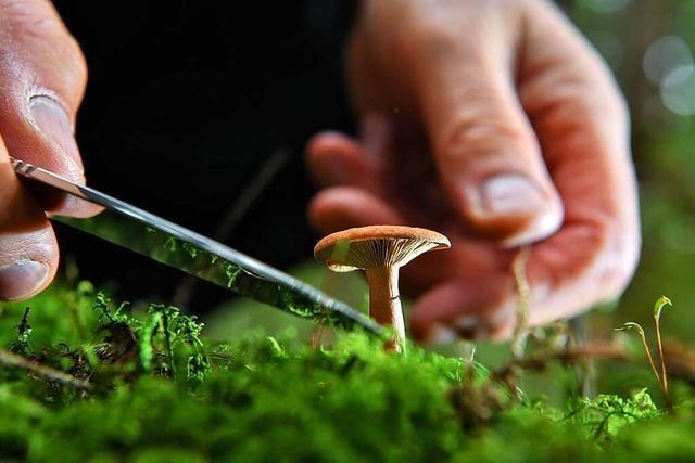Wie sammelt man Pilze richtig?