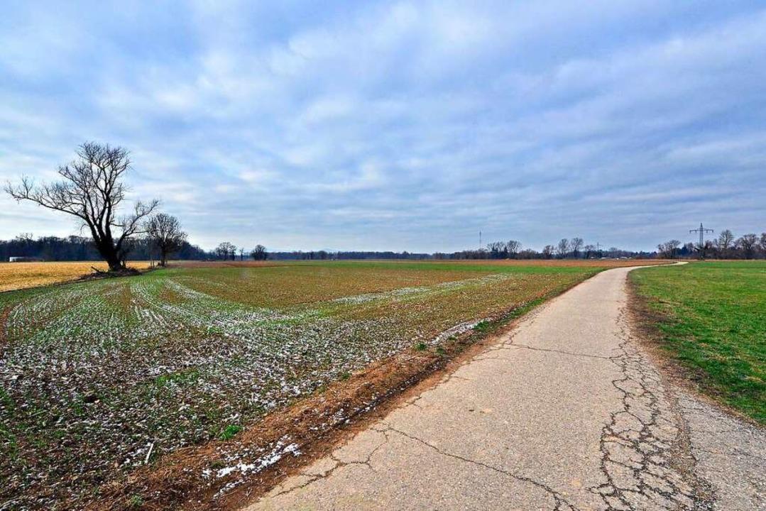 Noch unbebaut: Auf diesen landwirtscha...nnte, würde es 20 bis 30 Jahre dauern.  | Foto: Michael Bamberger