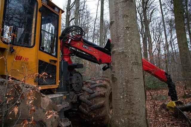 Forstmaschine im Eichwald nach Protesten gegen Fällarbeiten beschädigt