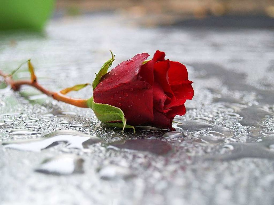 Trauer um Egon Wissler (Symbolbild)  | Foto: fotolia.com/Hanae Yamashita