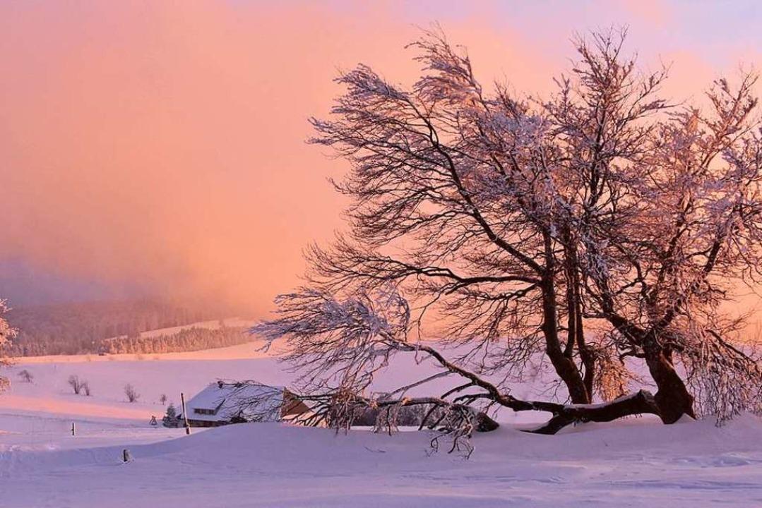 Die Strahlen der Abendsonne bringen di... Schindelmatt/Schauinsland zum Glühen.  | Foto: Edgar Erler