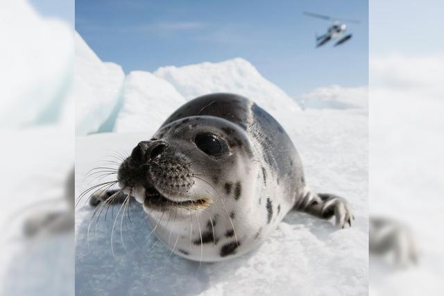 Kurz gemeldet: Säugetiere mögen's kalt