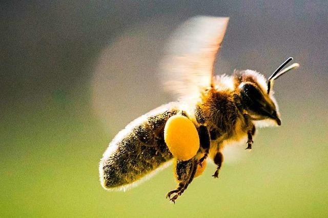 Kampf für die bayerischen Bienchen