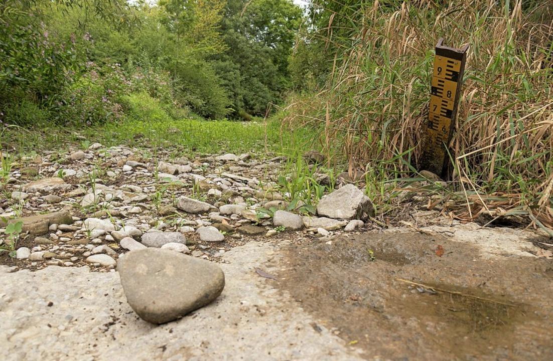 Viele Oberflächengewässer führten im v...n und Lauchringen,  kein Wasser mehr.   | Foto: Rosa