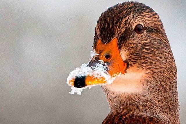 Brauchen Wildtiere im Winter menschliche Hilfe?