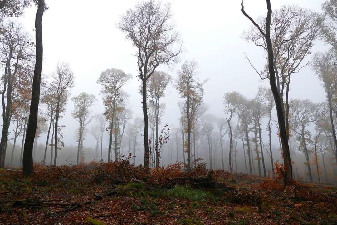 Die Art und Weise, wie der Eichwald ve...11; sorgt weiter für hitzige Debatten.  | Foto: Susanne Ehmann