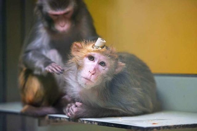 Abstimmung: Bekommen Primaten in Basel Grundrechte?