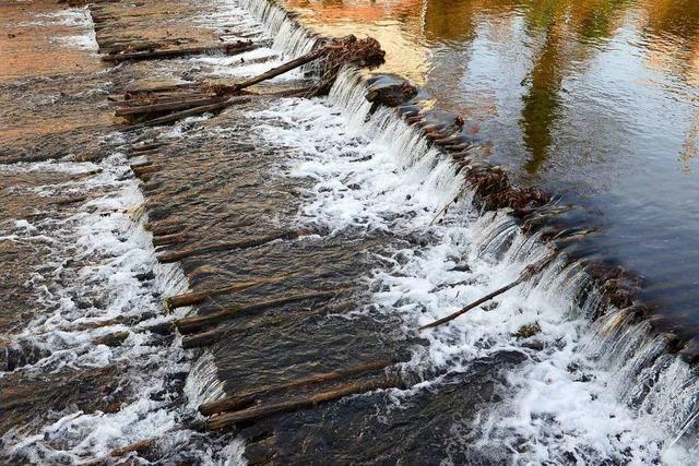 Stadt will für Fischrampe in der Dreisam eine Million Ökopunkte einnehmen