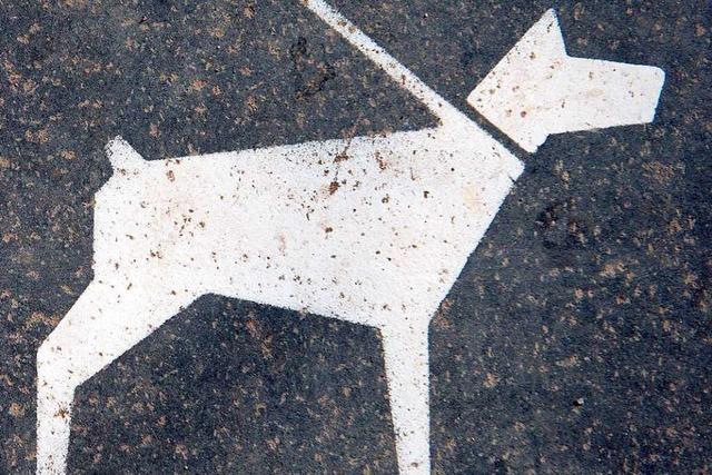 Biss mit Folgen – Rottweiler geht zum zweiten Mal auf anderen Hund los