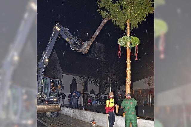 Narrenbaum an neuem Ort
