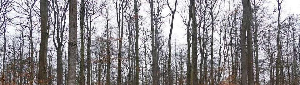 Streit um den Müllheimer Eichwald