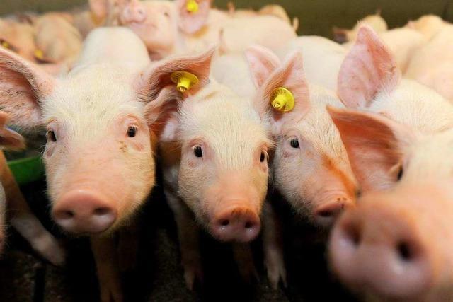 Klöckners Tierwohl-Label ist nur ein erster Schritt