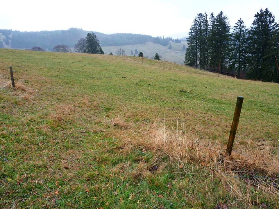 Auf diesem Grundstück am Bergrücken Ra... in einem FFH- und Vogelschutzgebiet.   | Foto: Sattelberger/Jäger