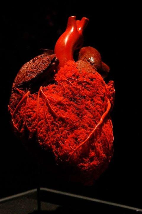 Das Präparat eines menschlichen Herzens.  | Foto: Institut für Plastination