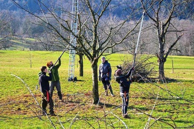 Fachwarte treffen sich zum Baumschnitt-Tag in Ebringen