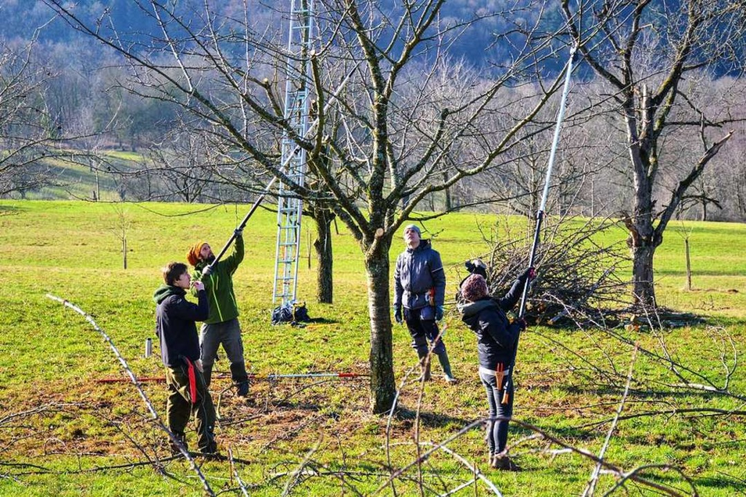 Obstbaumschnitt ist Teamarbeit. Gemein... es in den Berghauser Matten ans Werk.  | Foto: Gabriele Hennicke