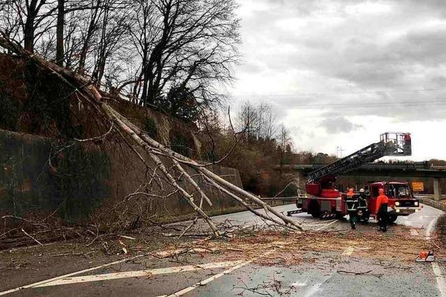 Bäume auf der B 317 bei Schopfheim verursachen zwei Unfälle