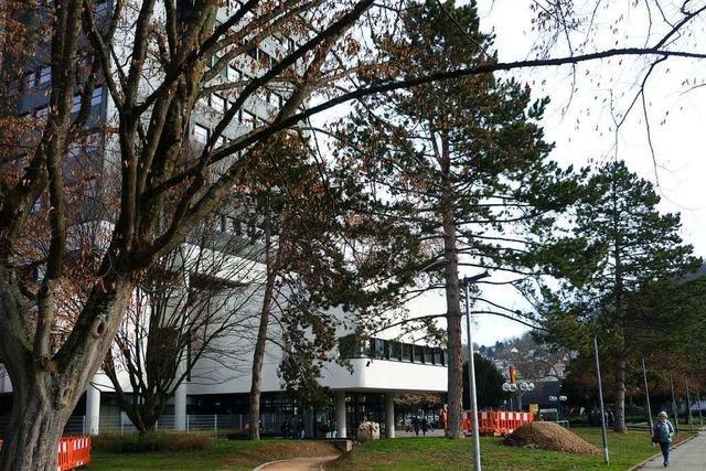 Über der Rathaustiefgarage muss abgeholzt werden – weil die Bäume zu schwer sind