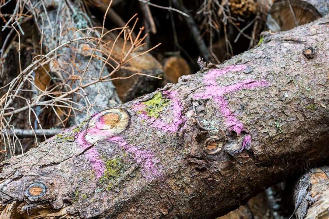 Kritische Worte über Holzheizungen  | Foto: Carlotta Huber