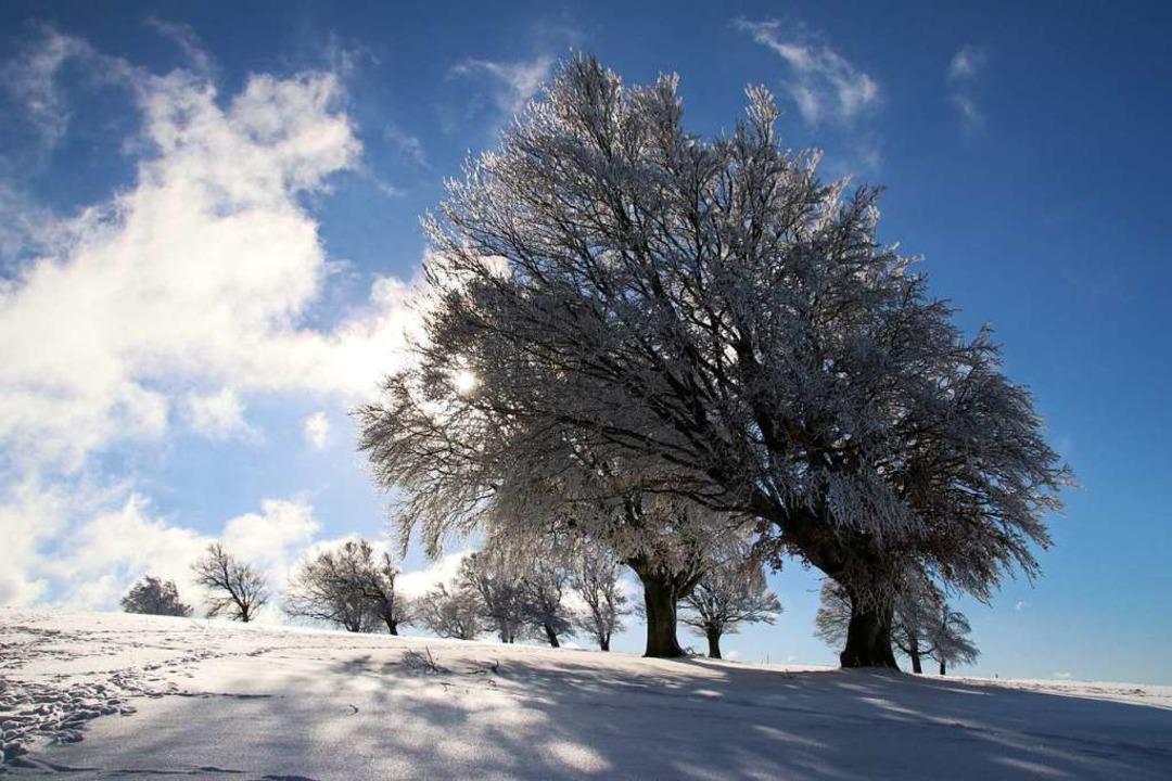 Verschneite Wetterbuchen in Hofsgrund  | Foto: Bernd Wehrle